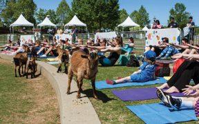 Goats on the Yoga Mat