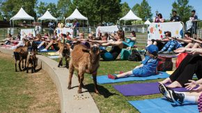 Goats on the Yoga Mat